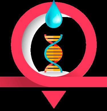 Icone ADN